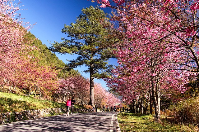 三月春甦醒:日本賞櫻人氣8大景點推薦