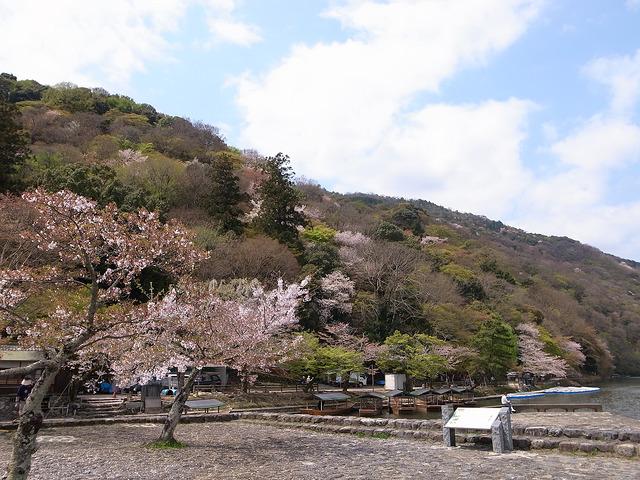 日本賞鶯京都嵐山