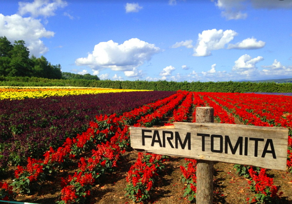 夏季必訪!日本北海道6大賞花景點推薦,來趟繽紛燦爛的北國自由行吧