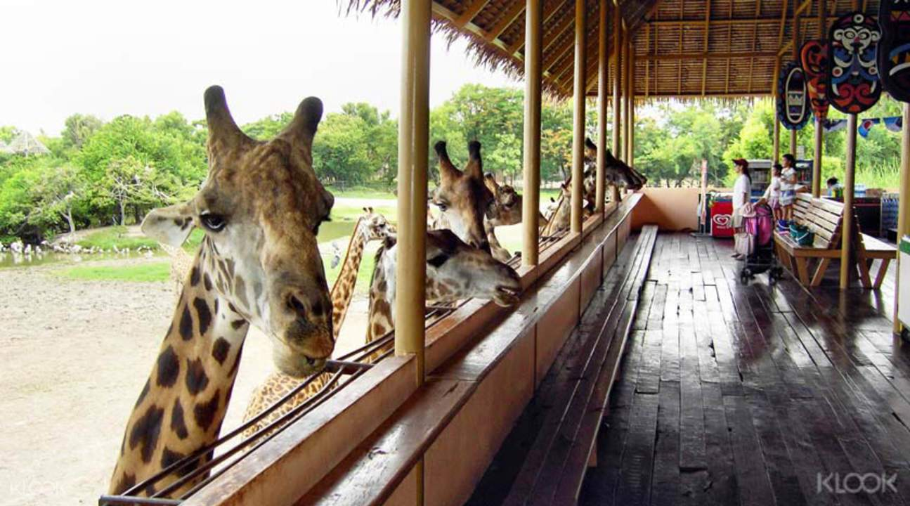 曼谷野生動物園