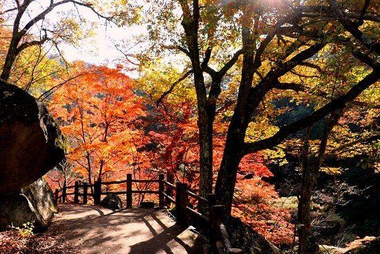 秋季賞楓必去!日本5大推薦景點,北海道、福岡…徜徉滿山紅葉浪漫