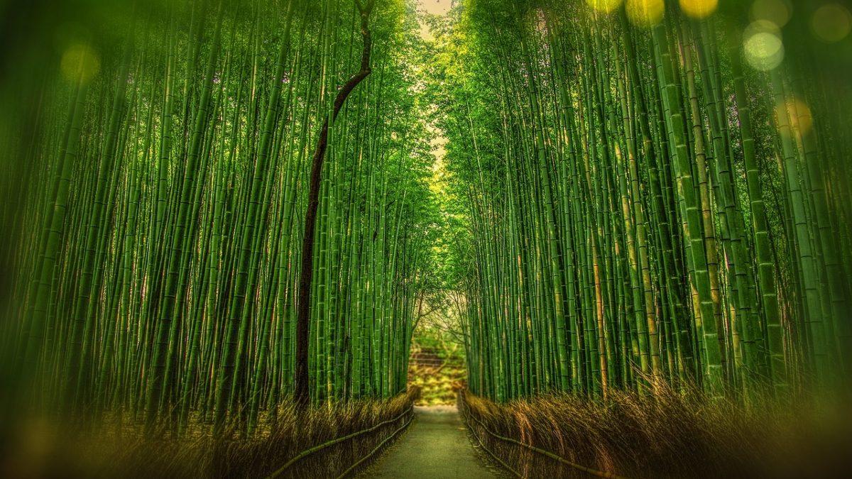 日本旅遊 | 10個京都免費景點,日本自由行這樣玩最省