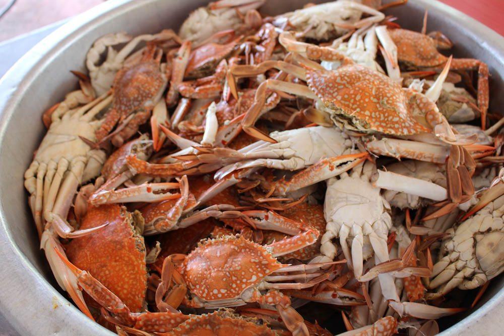 秋天就愛吃螃蟹!北台灣3大海港品蟹不藏私推薦
