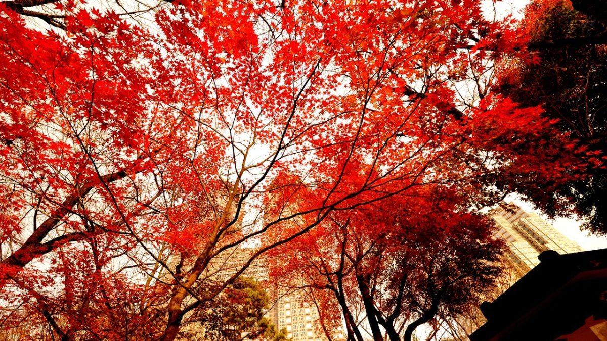 日本自由行想楓了!東京賞楓景點推薦TOP10,近郊市區紅葉通通有