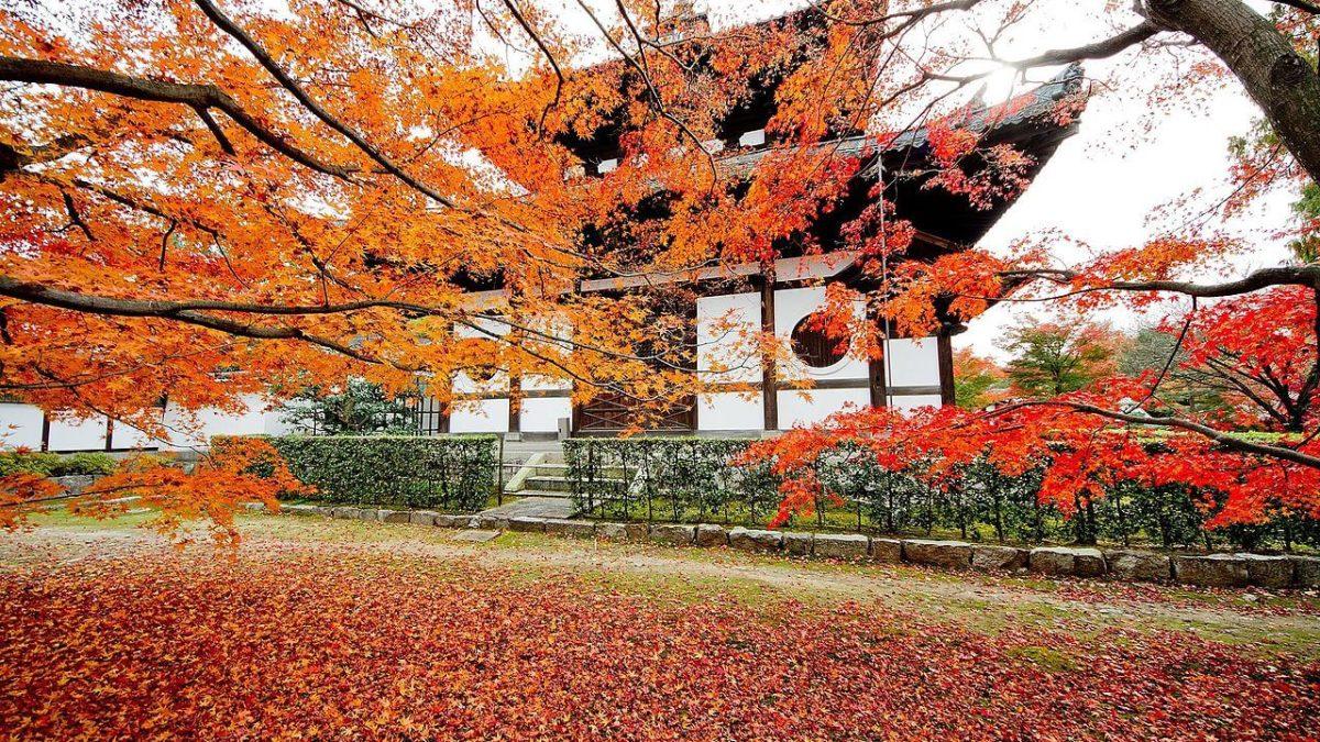 賞楓到日本!關西地區賞楓名所推薦攻略,京阪奈10大紅葉景點這樣逛