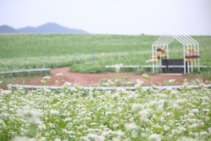 大麥國度鶴苑農場