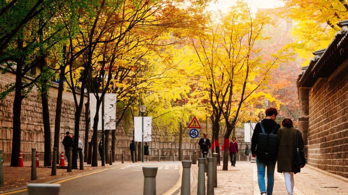 跟著《偶像劇》男女主角,浪漫秋遊韓國盡賞蕎麥花、銀杏、楓紅