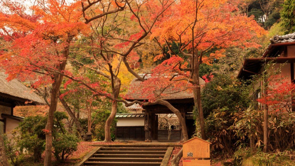 文青、攝影迷必去!東京近郊神奈川縣狩楓推薦5景點,不必人擠人