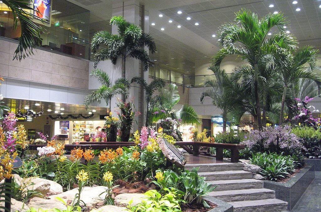 轉機過夜都免驚!新加坡樟宜機場美食購物全攻略