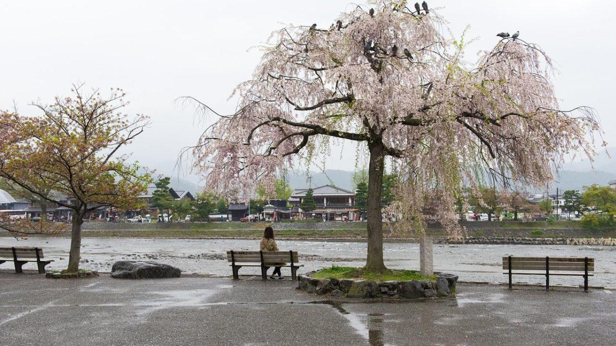 內行人私房景點!2020 日本東京賞櫻秘境推薦,避開人潮享受櫻花雨