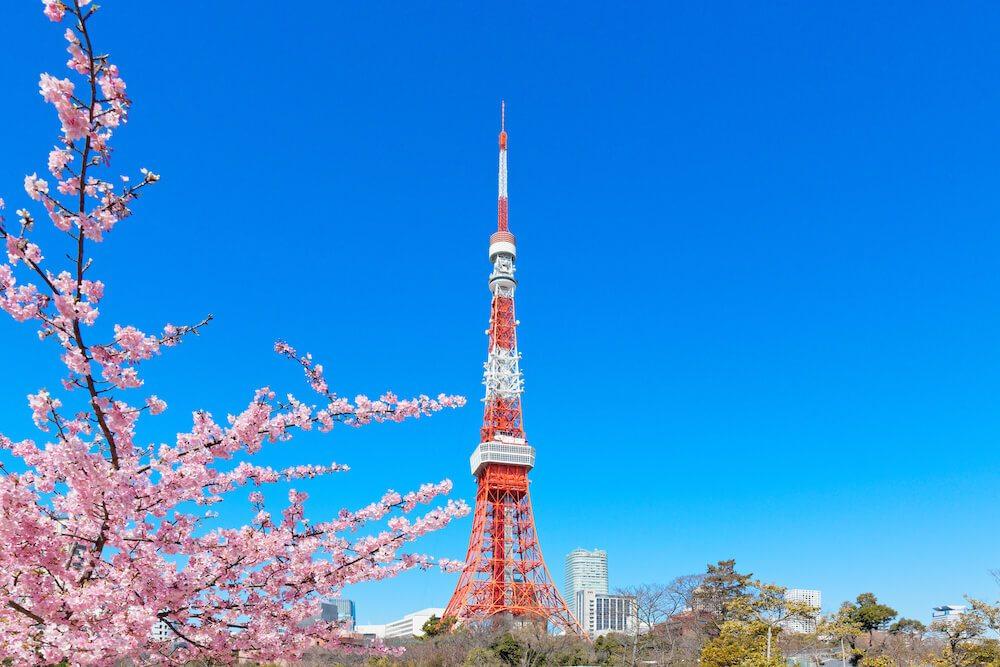 東京賞櫻芝公園
