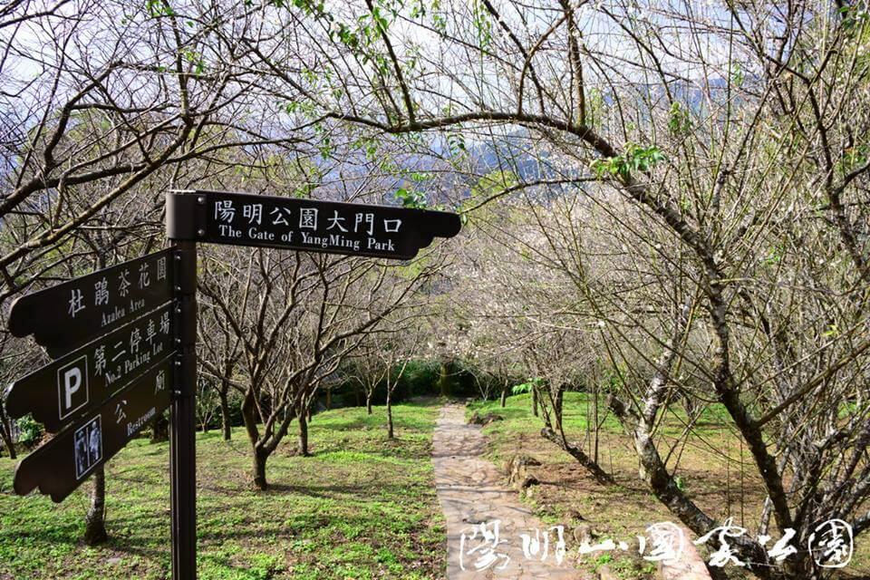 陽明山茶花園