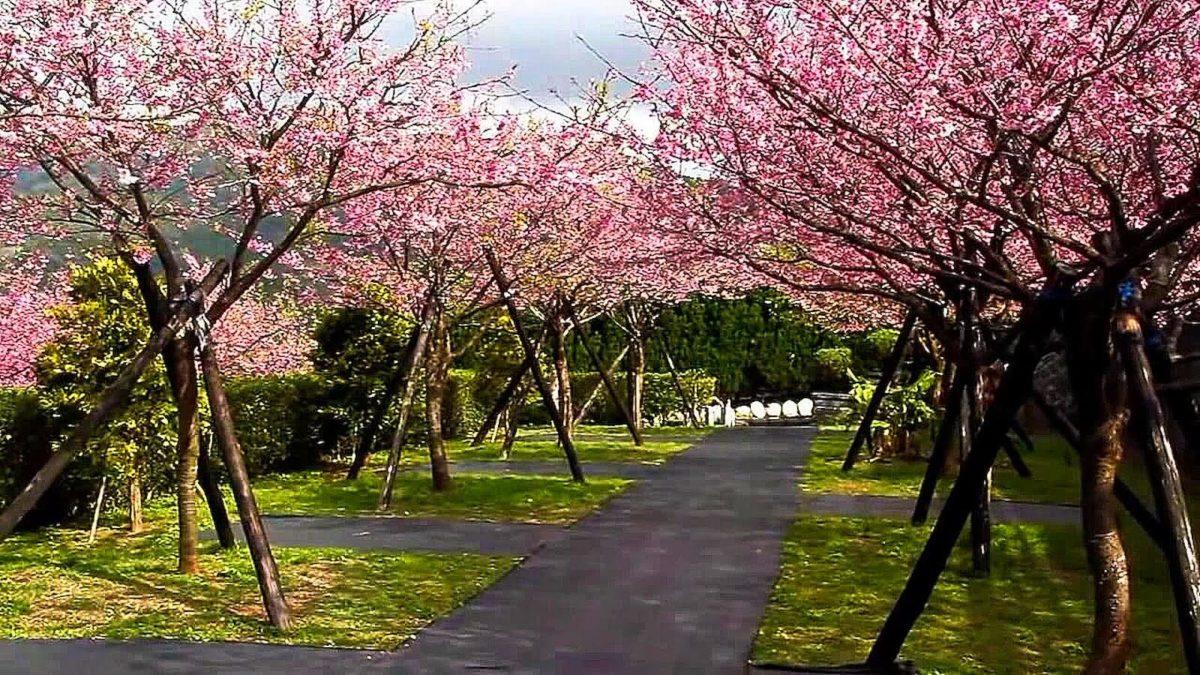 台北旅遊 | 2021 台北賞櫻推薦景點top10:天元宮、陽明山春遊去