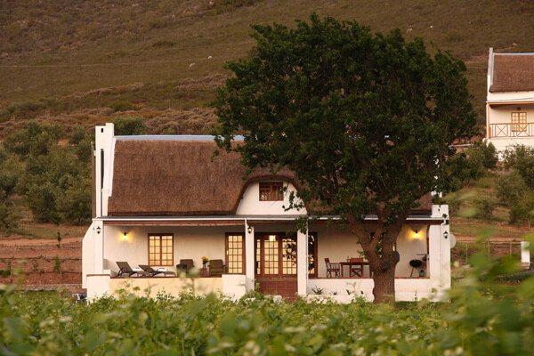 南非西開普