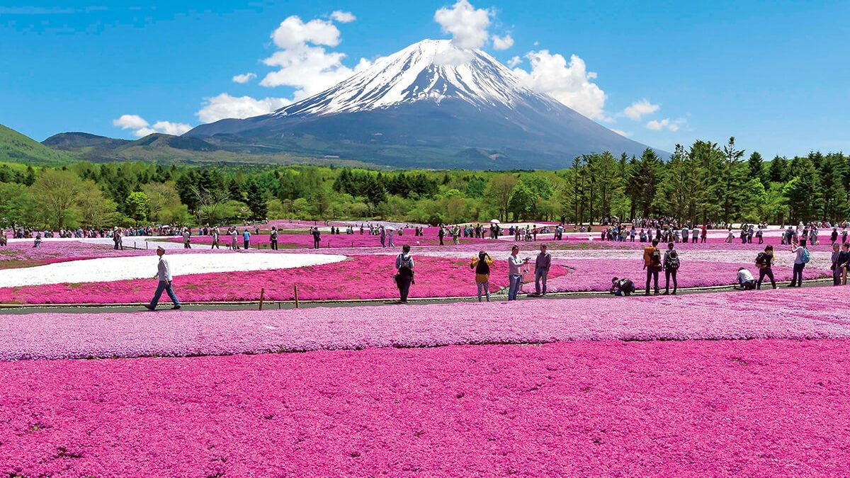 富士山芝櫻新情報!河口湖一日遊行程 & 交通 & 景點推薦