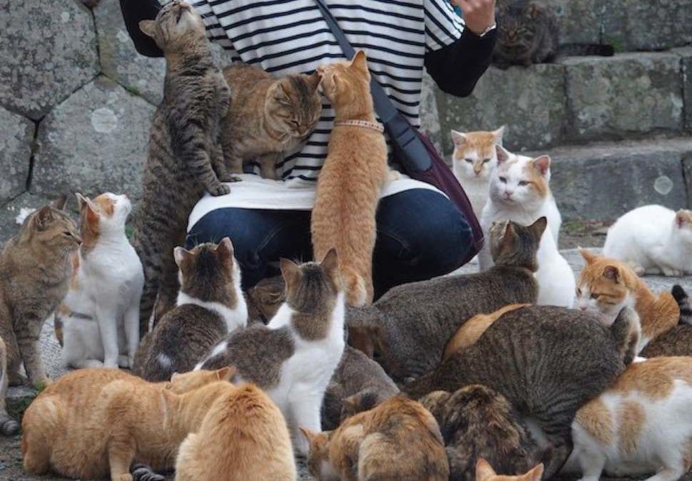 貓奴一生必訪!日本6大貓島旅遊地圖,青島、田代島…讓你輕鬆賞貓去