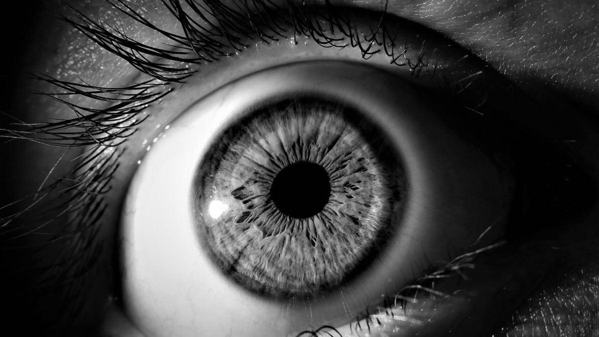 保養眼睛吃什麼?這些食物 & 保健食品預防黃斑部病變,輕鬆護眼好簡單