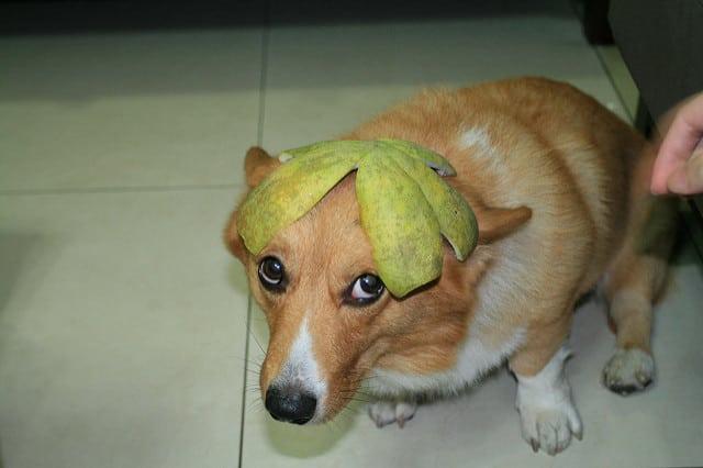 中秋節 柚子
