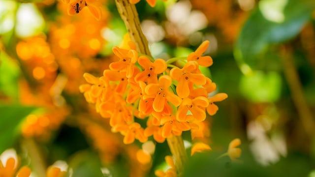 中秋節 賞花