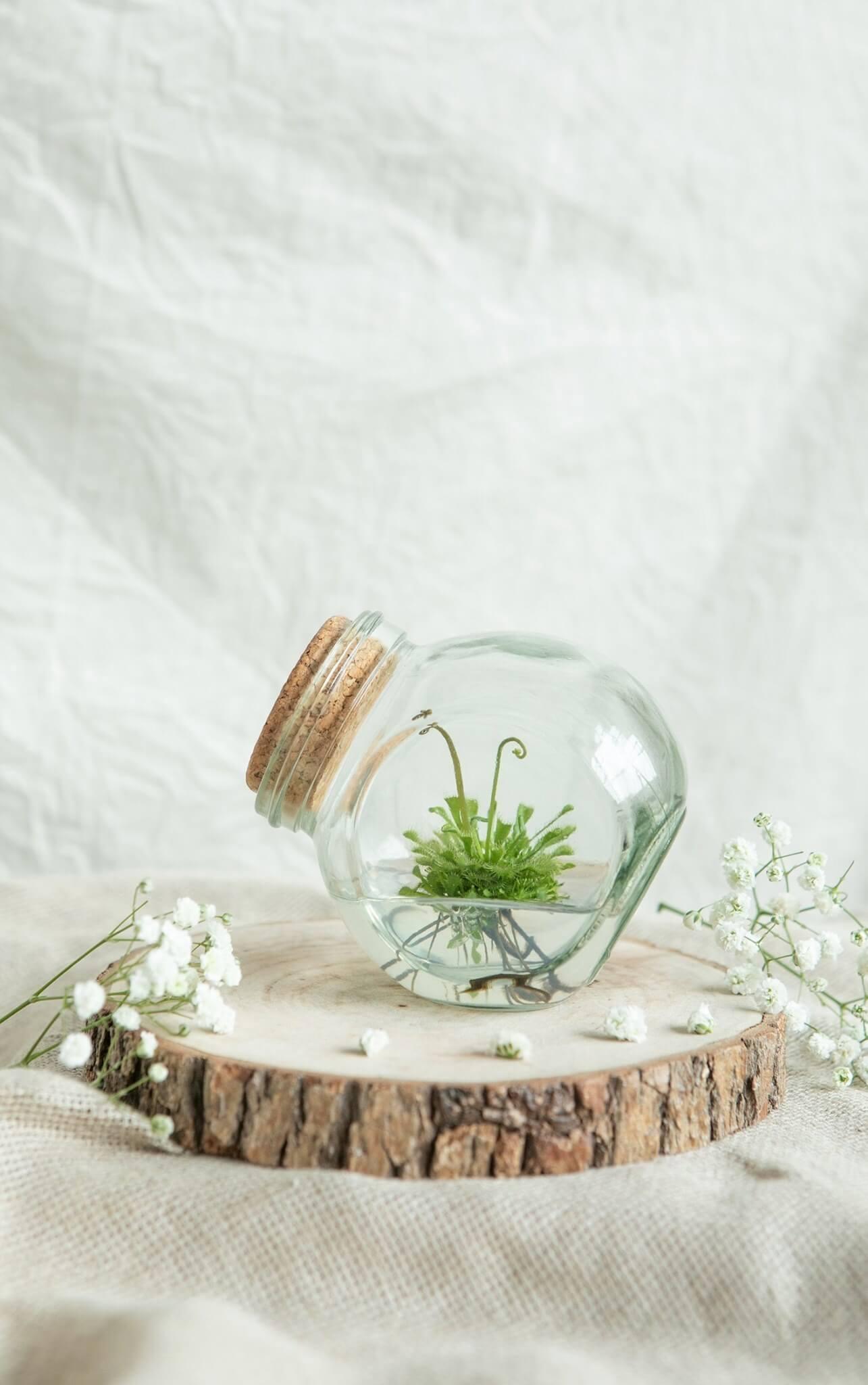 【小室瓶栽】不用澆水室內療癒植物