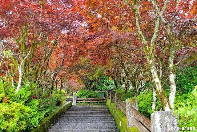 宜蘭 太平山 楓紅