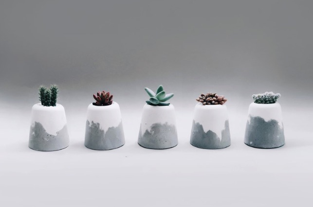 SNOW VOLCAN 小雪火山│仙人掌/多肉/空氣鳳梨水泥盆栽 (含植物)