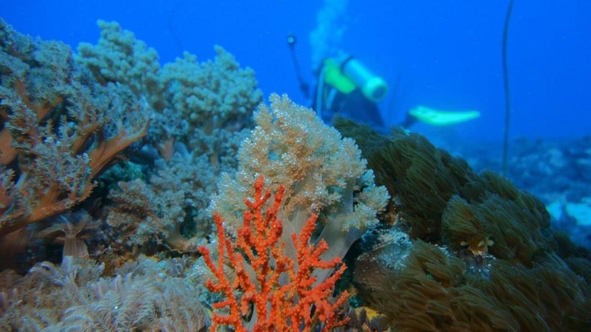 浮潛幹嘛去國外!台灣綠島潛水體驗&住宿推薦,精彩水上活動玩不完