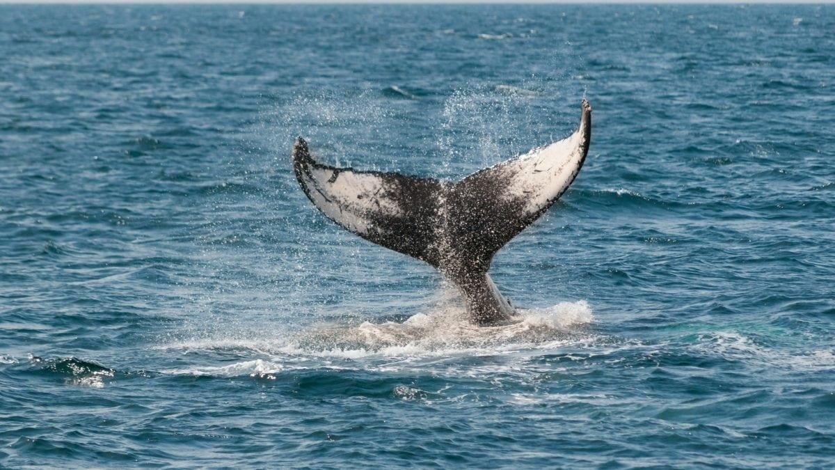 夏季就來趟賞鯨輕旅行!台灣賞鯨地點5大特搜,順便到花蓮台東玩一發