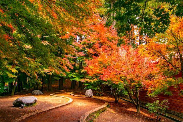 福壽山 楓葉