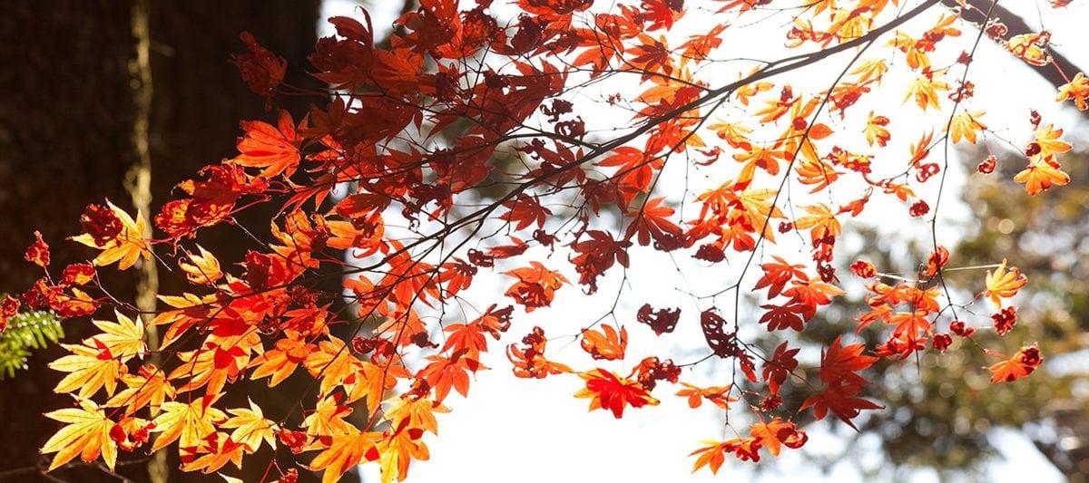 秋季旅行看這裡!日本廣島賞楓名所經典5選,沈浸楓景好浪漫