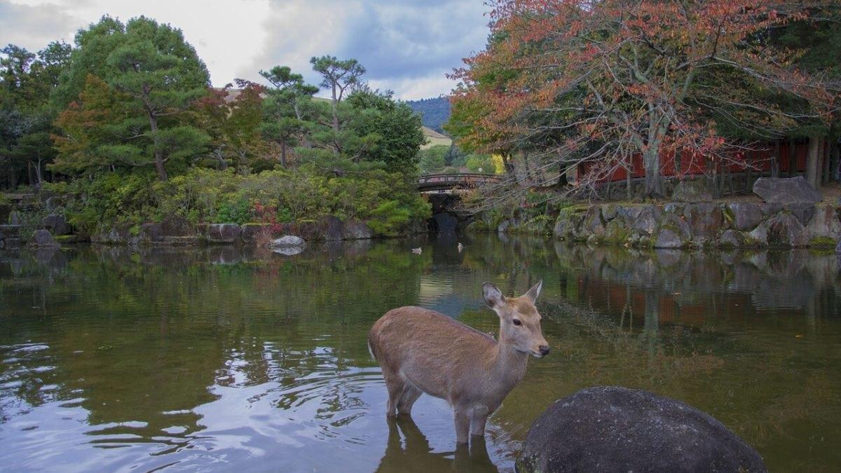 奈良旅遊一篇上手!日本奈良一日遊交通&景點&美食推薦懶人包