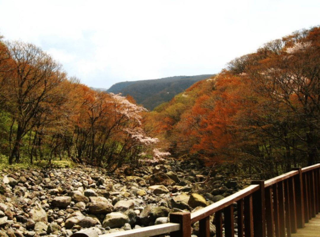 漢拏山國立公園