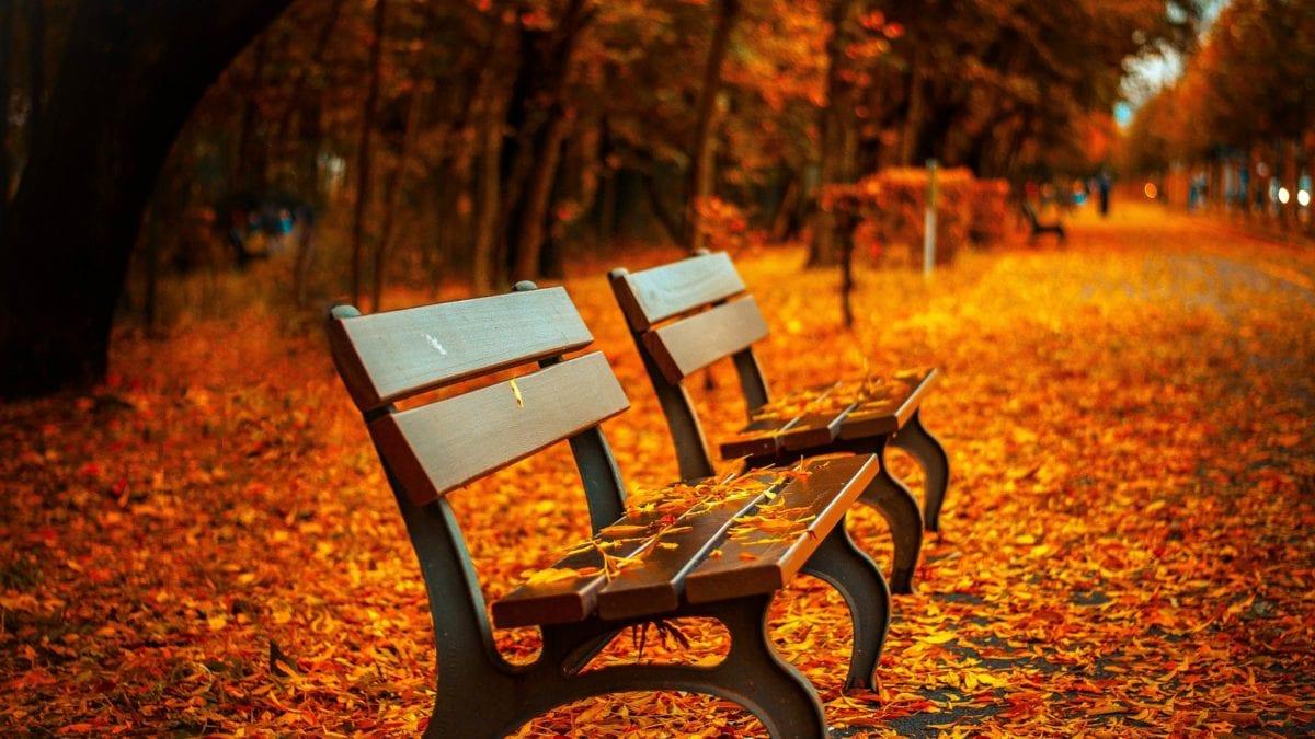 一日輕鬆遊~宜蘭秋天私房景點推薦,和秋天來趟金黃浪漫輕旅行