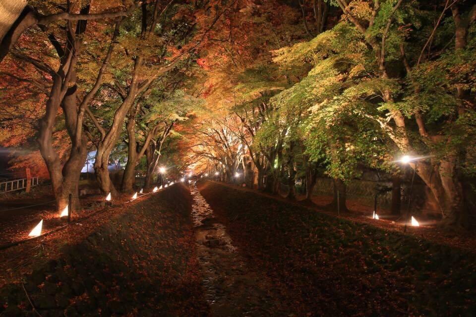 11月季節限定!富士河口湖紅葉祭介紹,超美紅葉迴廊等你來拍