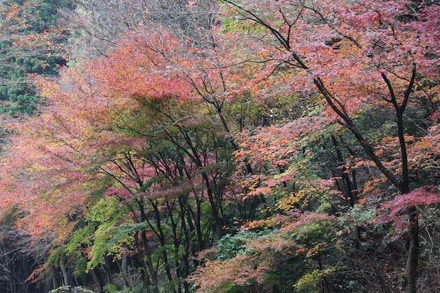 英彥山神宮