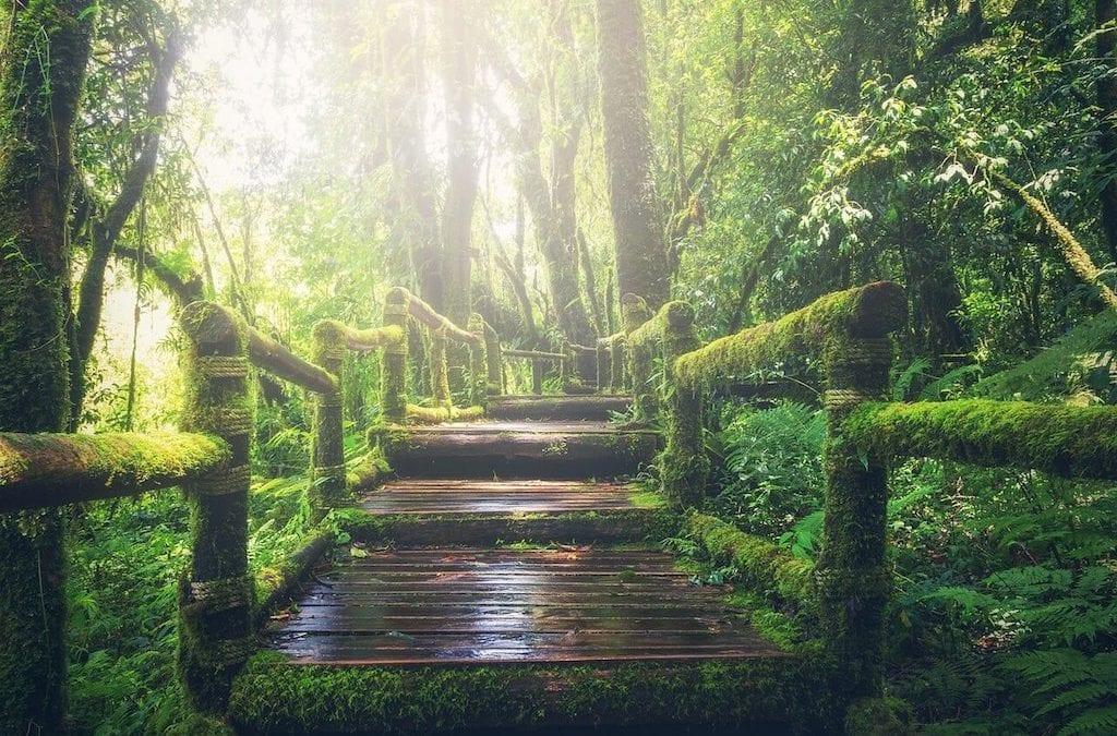 cnn評點全球最美小路!台灣宜蘭太平山,見晴懷古步道秘境一日遊