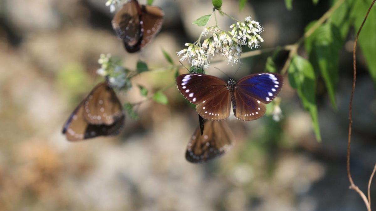 季節限定奇景!茂林雙年賞蝶季攻略、周邊景點、民宿推薦