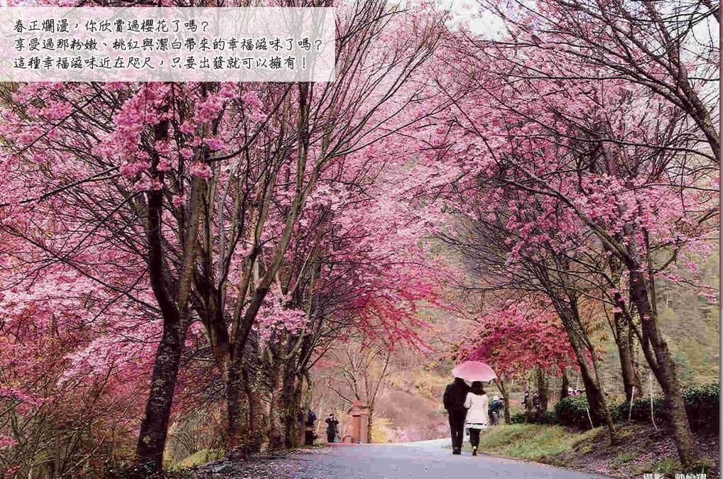 武陵櫻花季全攻略:櫻花季訂房、交通、一日遊行程推薦