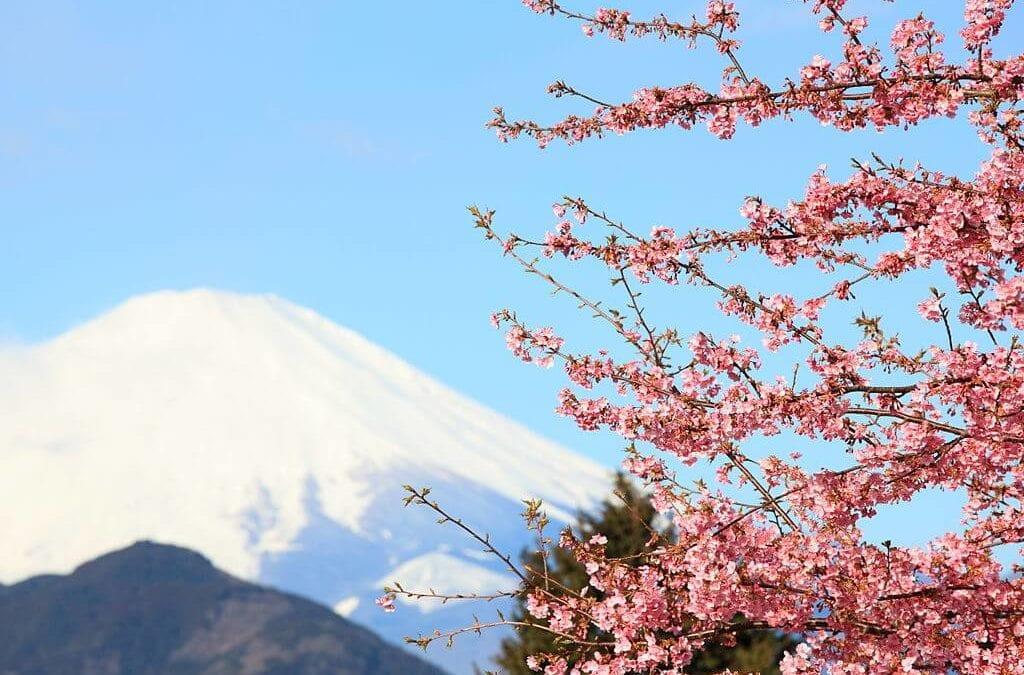 2019 日本櫻花季來囉!日本富士山櫻花景點、期間限定必買伴手禮