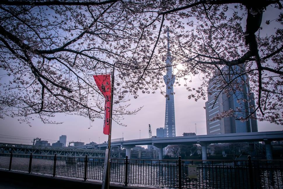 2019 日本東京賞櫻景點推薦top10、櫻花預測情報懶人包(隨時更新中)