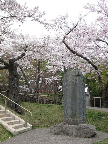 北海道櫻花函館公園