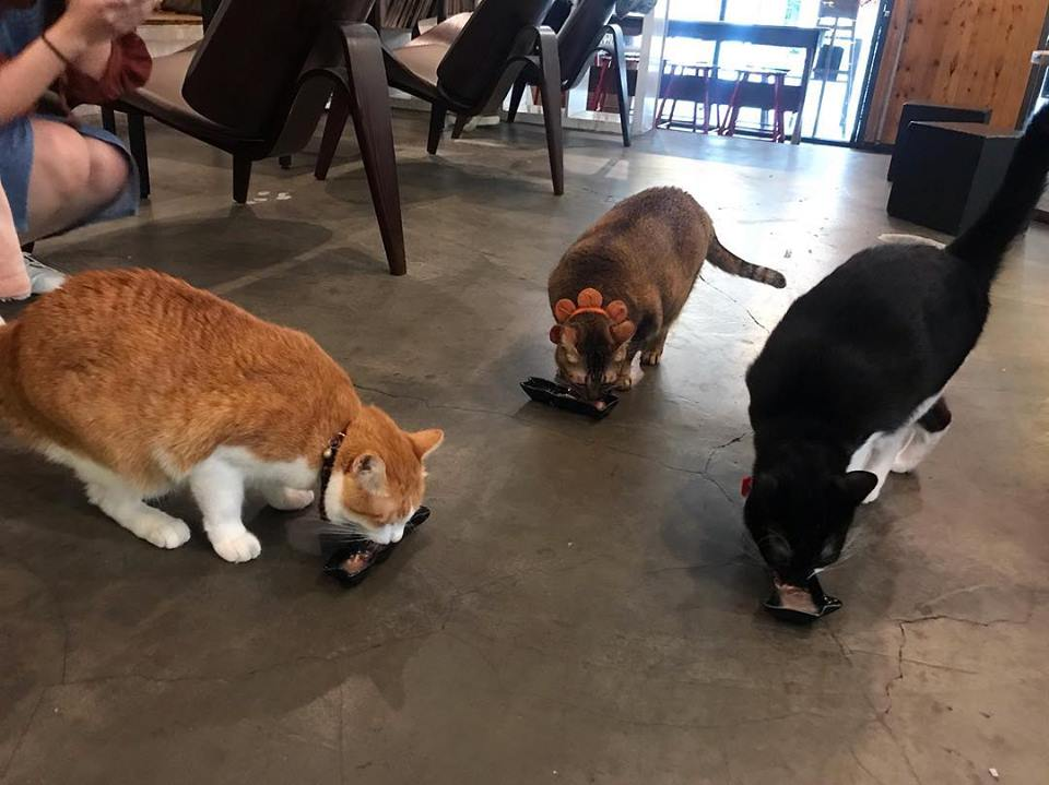 TOAST CHAT