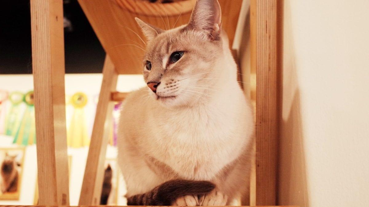 貓奴狗奴看過來!台北寵物友善餐廳&咖啡店推薦top10