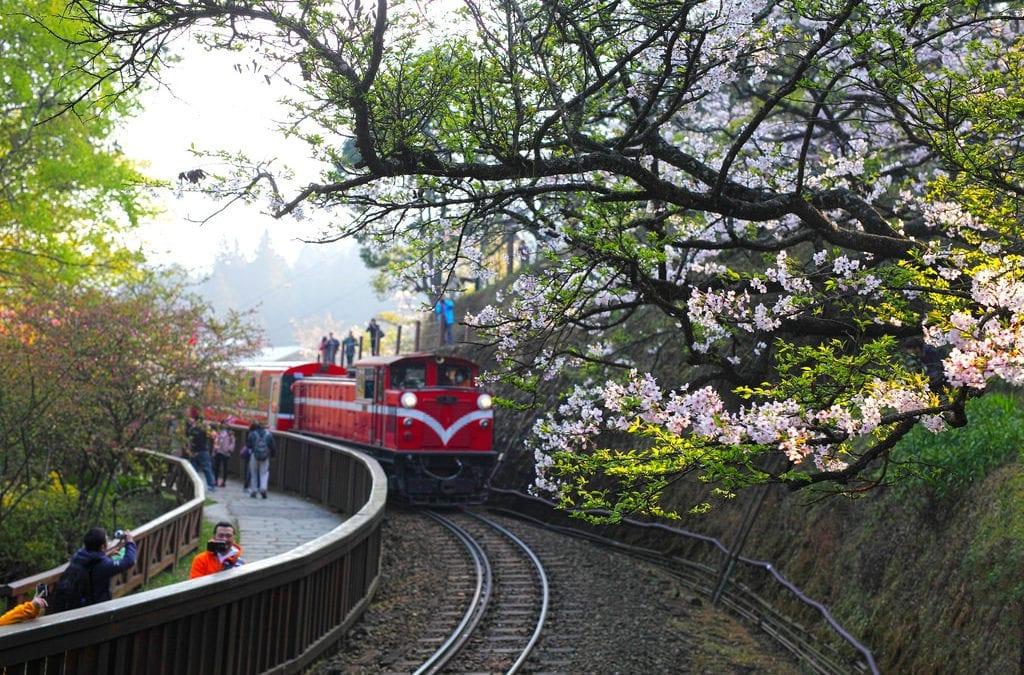 2019 阿里山花季這樣玩:賞櫻、賞紫藤地點、交通、時間,推薦景點旅遊情報