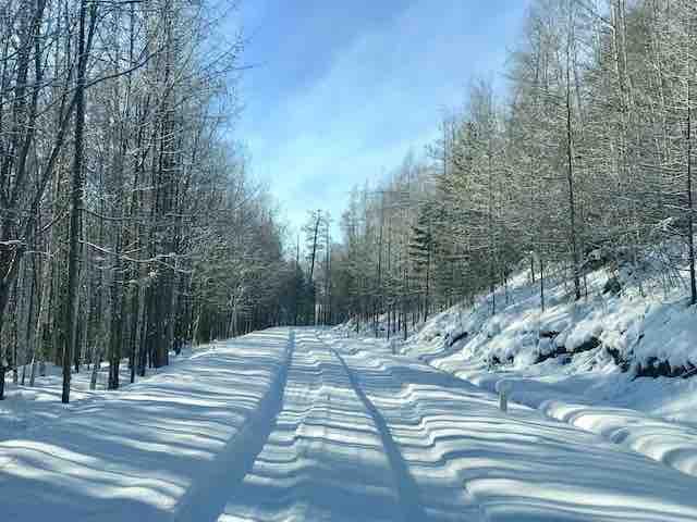 內蒙古原生森林