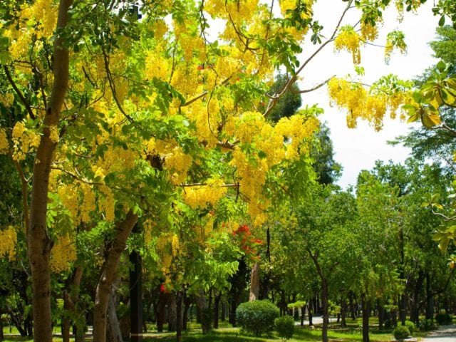 Buckley_Memorial_Park