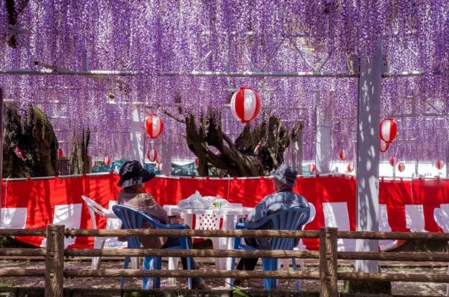 中山大藤祭