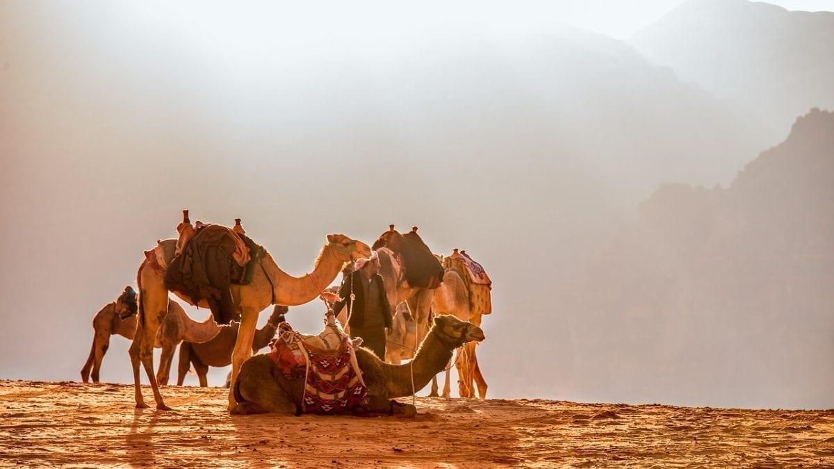 2019 鳥取旅遊行程這樣玩!騎駱駝、滑沙、胖胎車…15種刺激玩法推薦