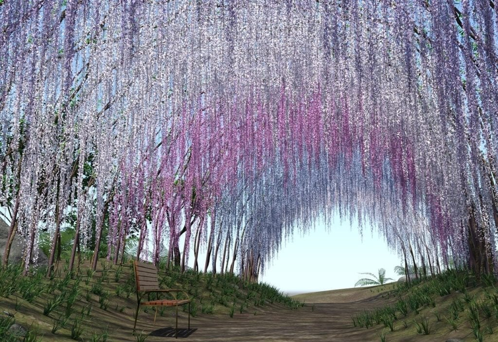 東京紫藤花