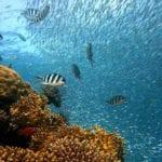 亞洲潛水勝地